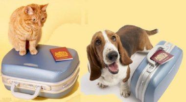 10 regras para o transporte de animais de estimação em voos