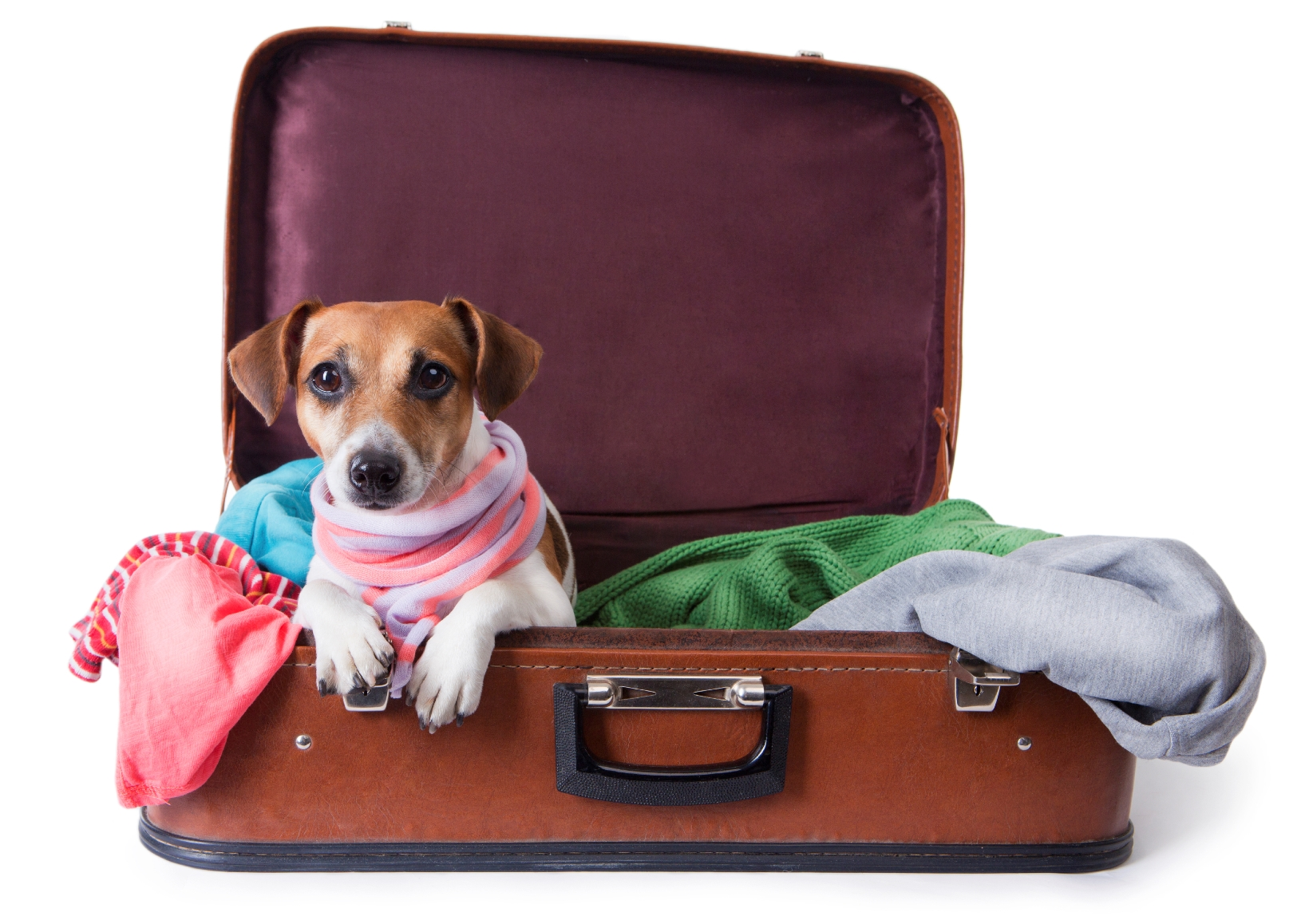 dez regras para o transporte de animais de estimação em voos