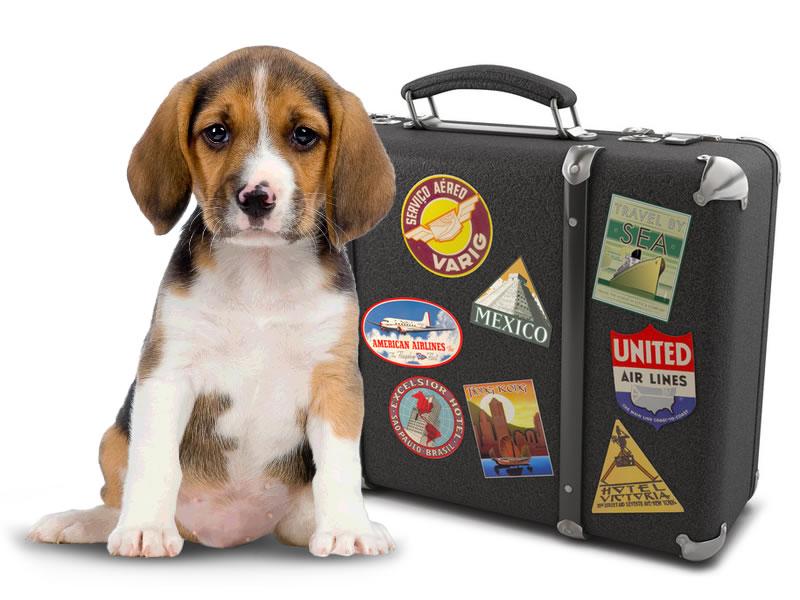 identificação para o transporte de animais de estimação em voos