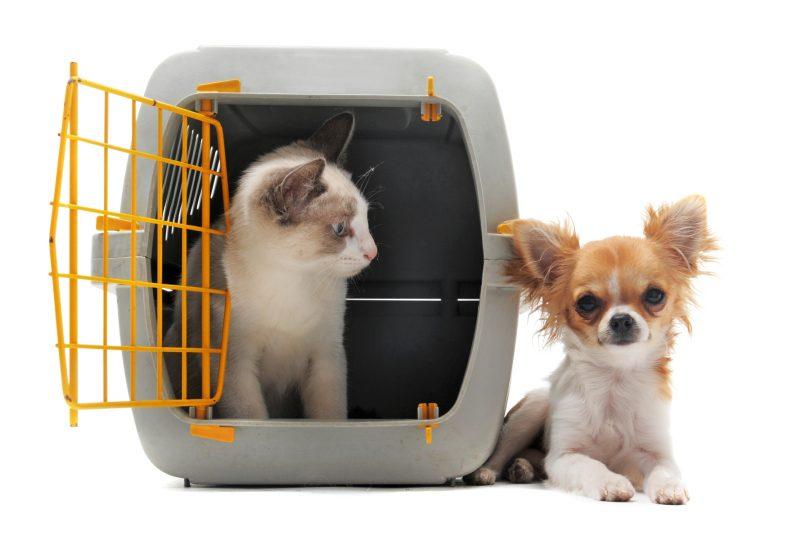 regras para o transporte de animais de estimação em voos